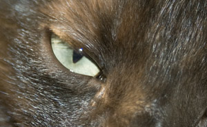 Extreme Close up of a cat's eye